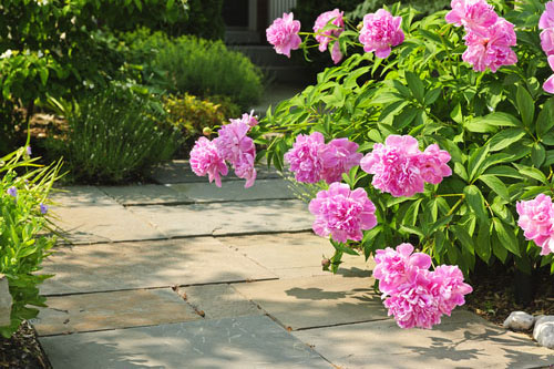 stone path with traditional plant bordering and bright features