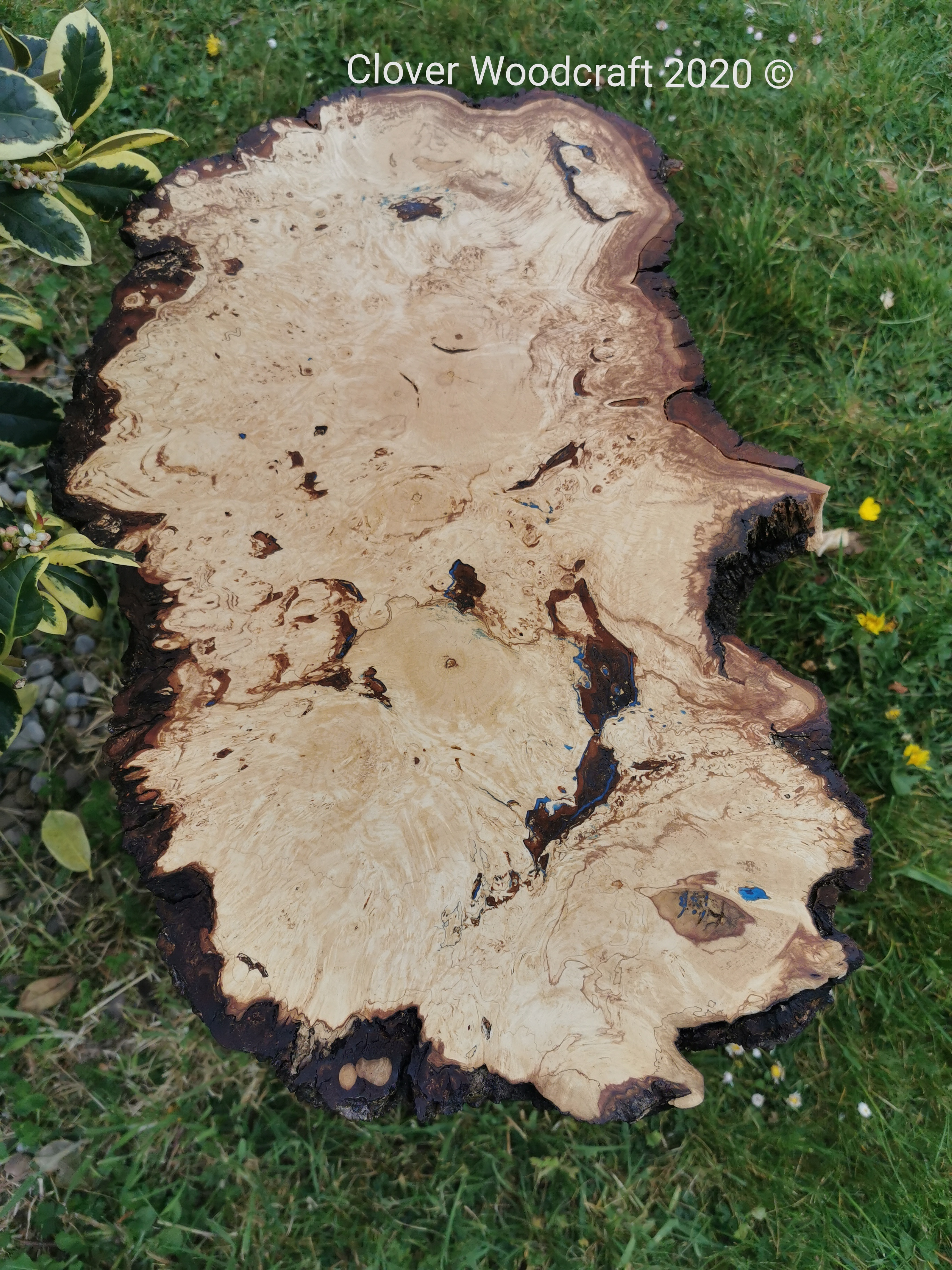 Natural Edge Burl Chestnut Coffee Table.