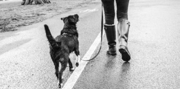 Small black dog walking alongside his owner on a loose lead