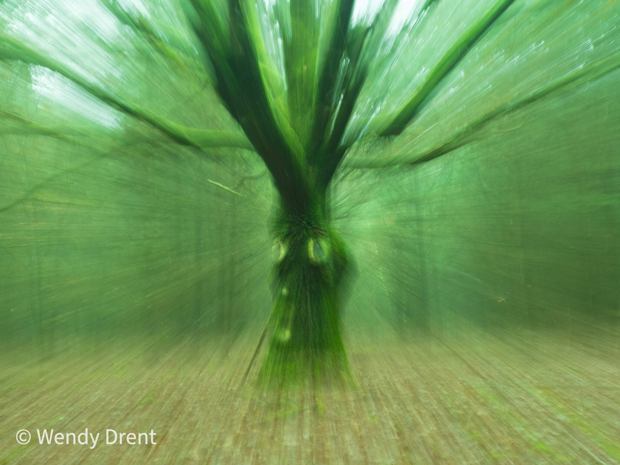 Tree, zoom blur, tree face, wendy drent, abstract, forest, bos, naturephotography,  leudal, limburg, netherlands