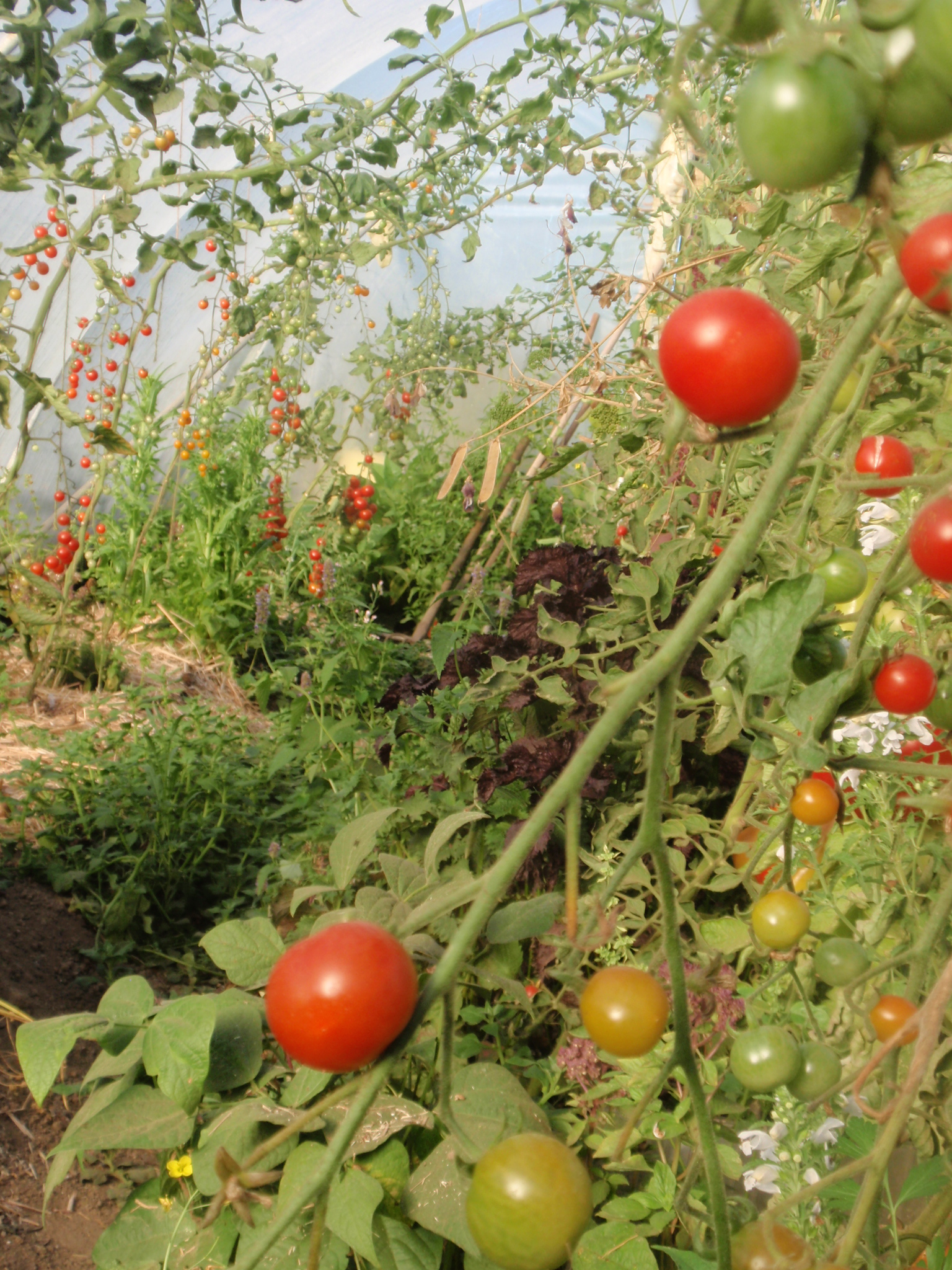 Polytunnel course (please check availability beforehand)