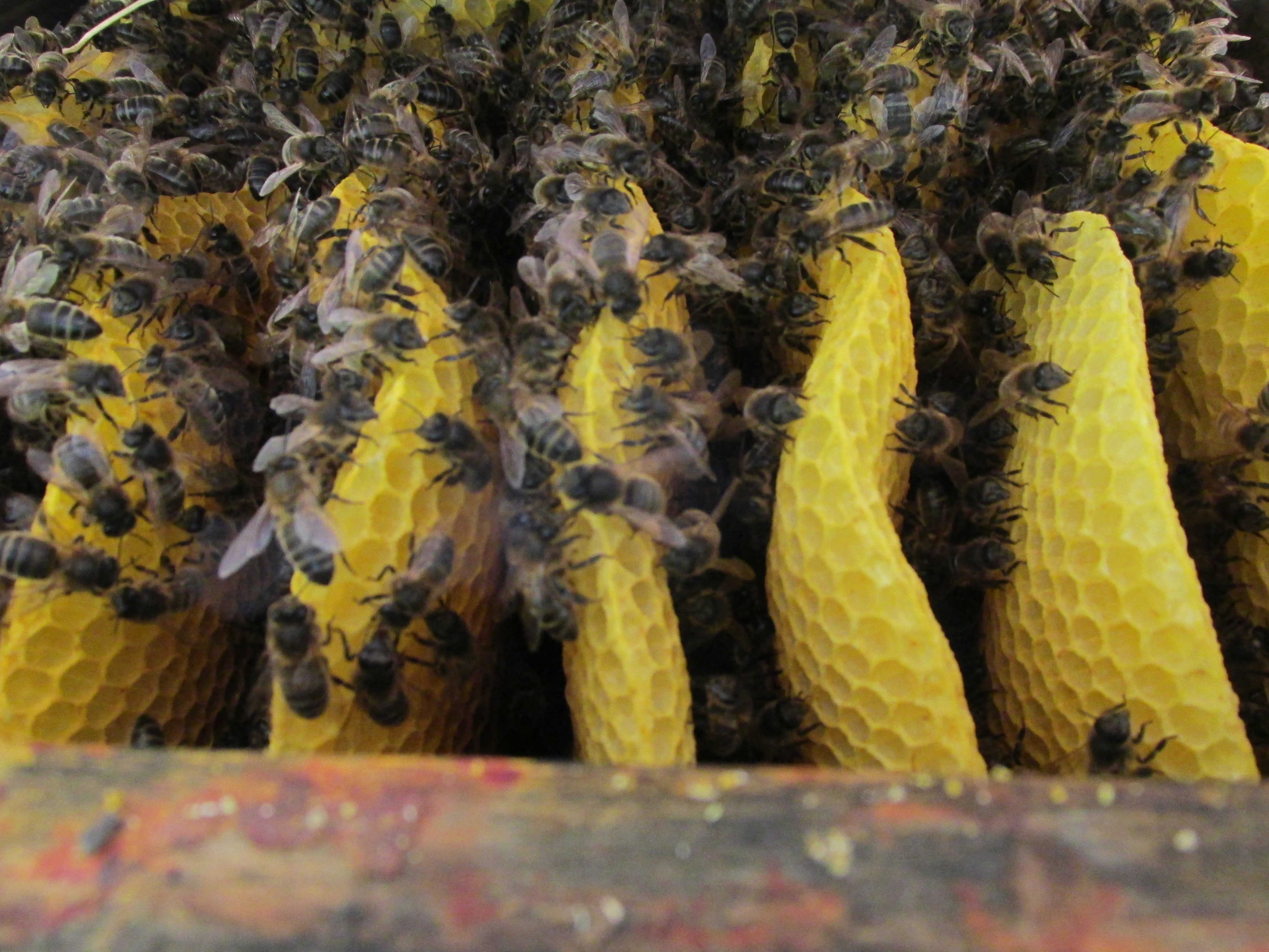 Warre Beekeeping Course (please check availability beforehand)
