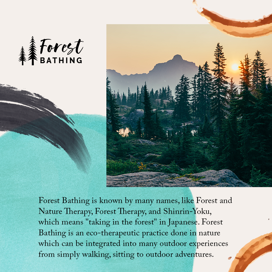 01_Forest_Bathing_Bundlepng