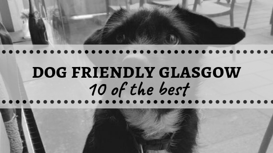 Dog Friendly Glasgow - 10 of the Best
