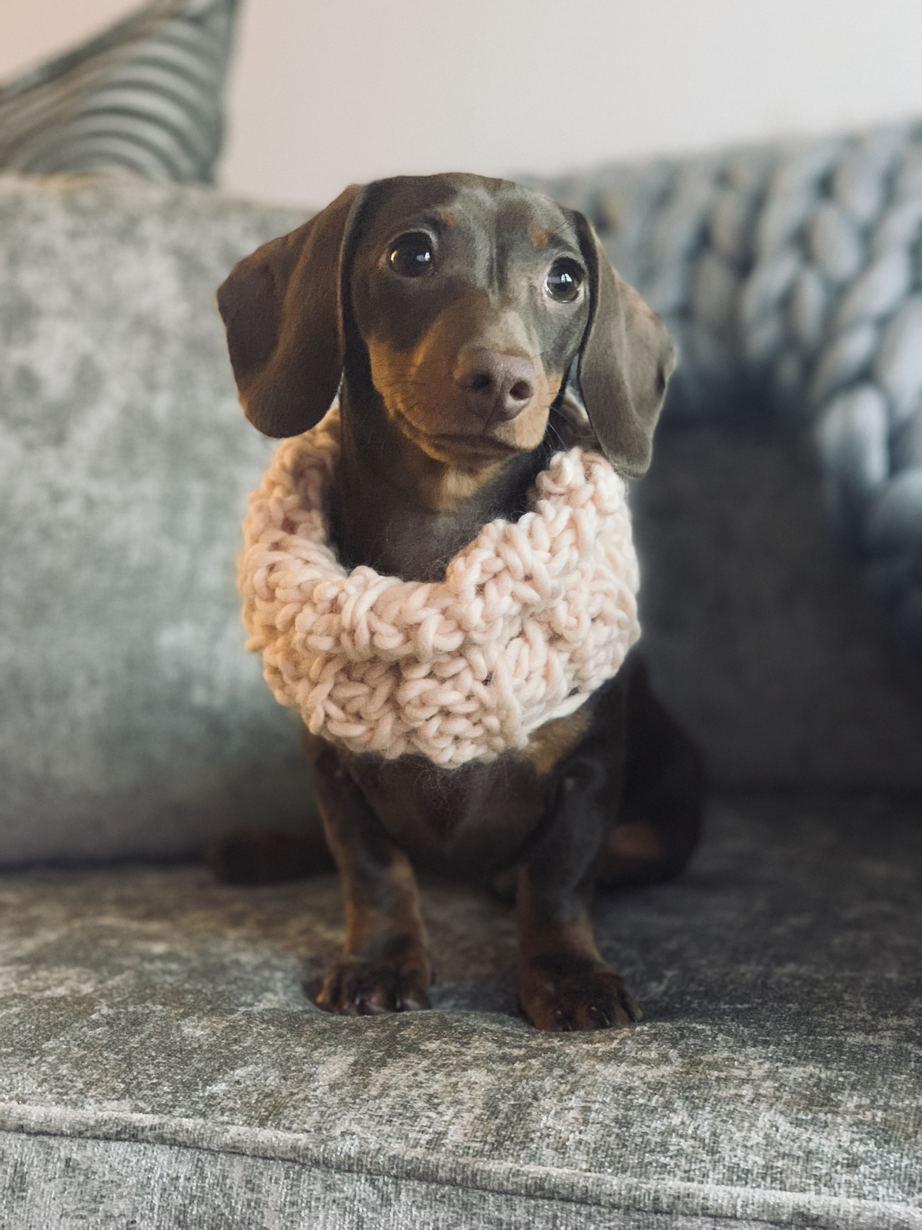 Merino dog Snood