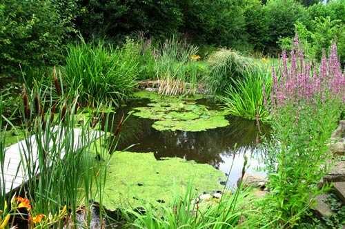 "Alt=""natural pond with planting"""