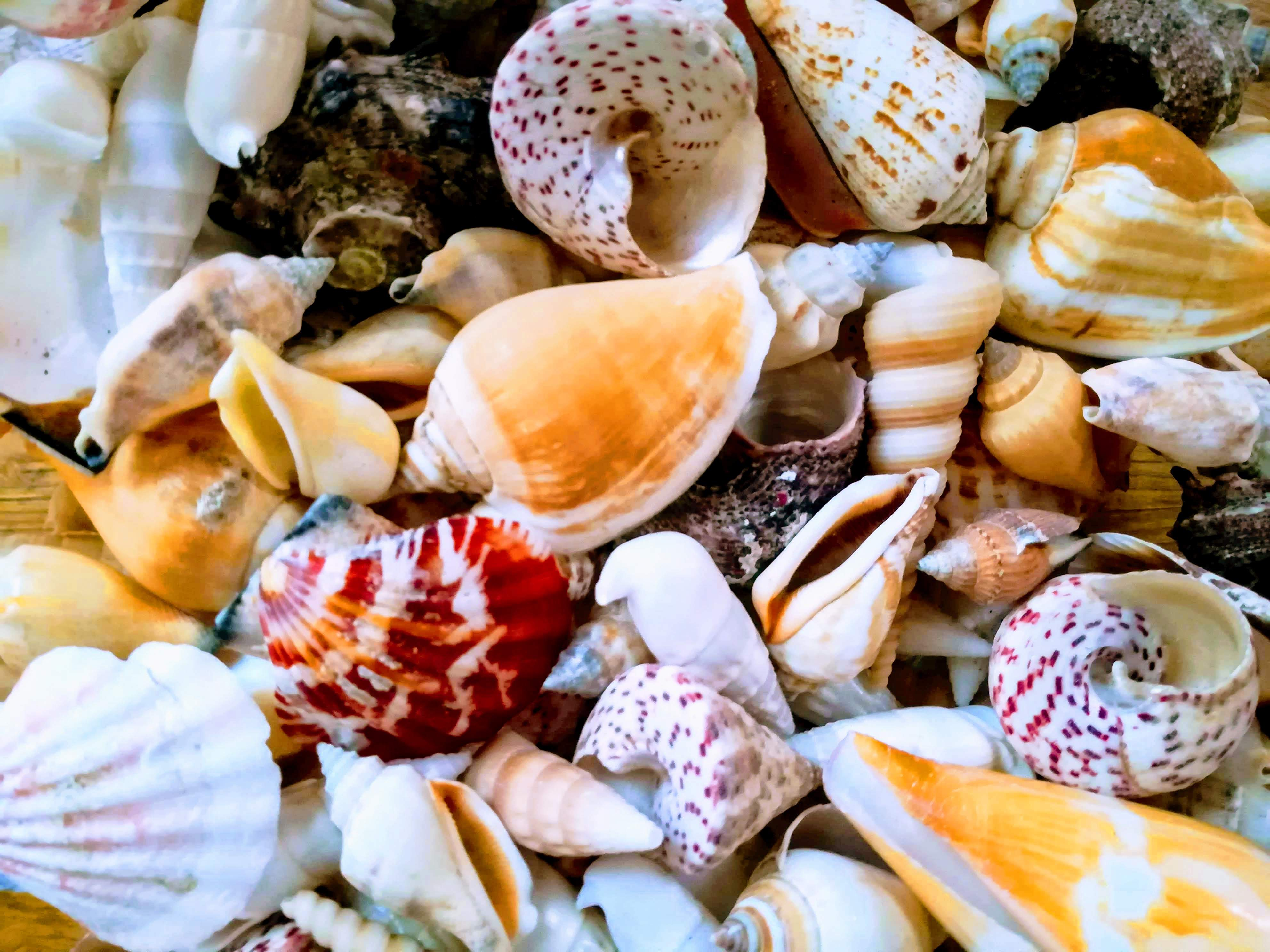 Sea Shells (7 in a pack)