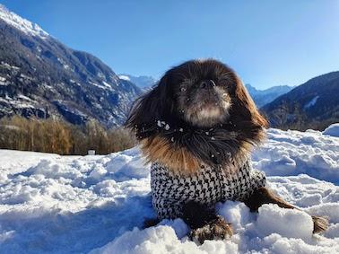 vacanze con cane valle di bleniojpg