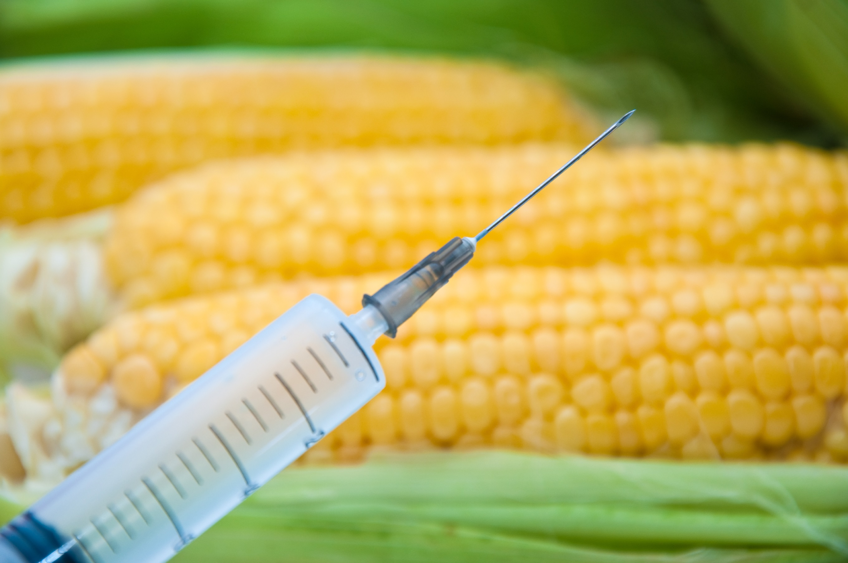 Corn plants that make anti-sperm antibodies