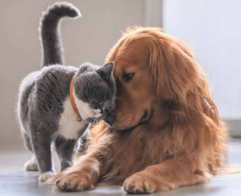 cat and dog 2PNG