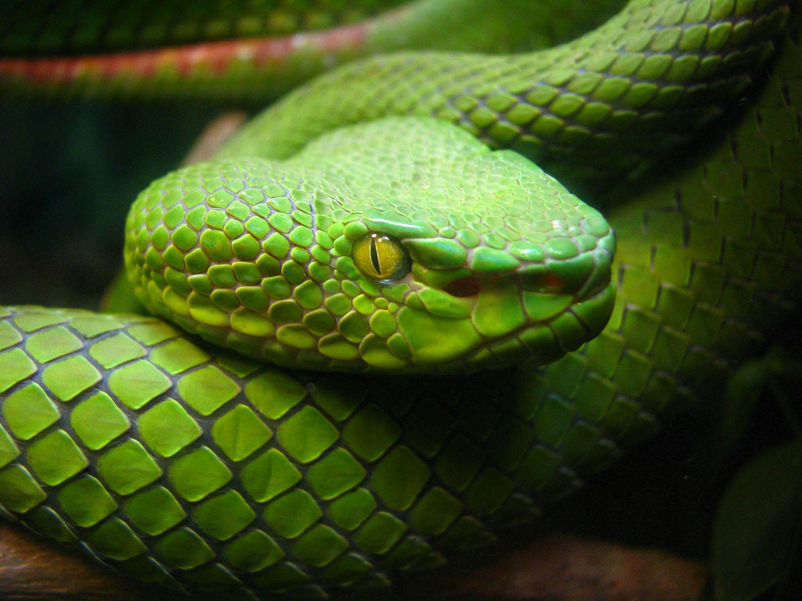 snakejpg