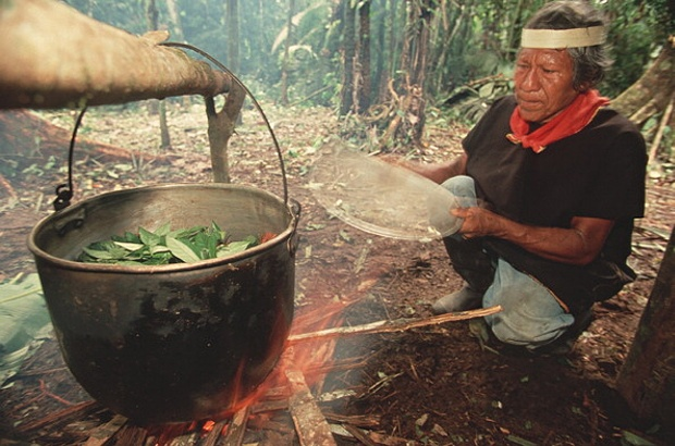 a shaman and ayahuasca