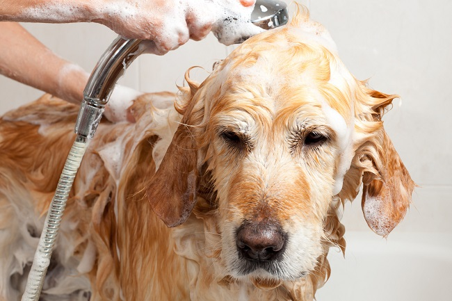 image of a dog being washed, Verdi Towels are large enough and sensitive enough for use on animals including dogs and cats