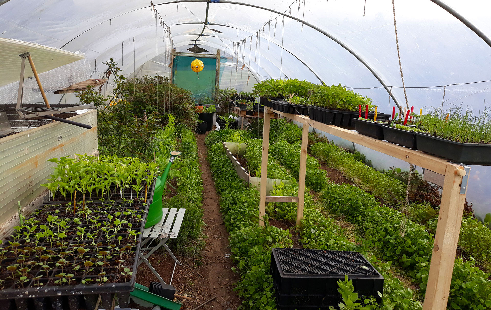 Polytunnel Course setting at Dunmore Country School