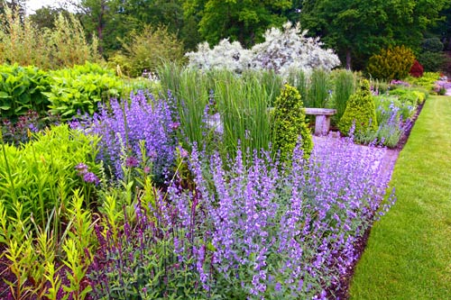 Purple Planted Border