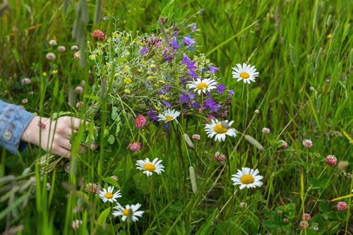 "Alt=""Girl holding picked wild meadow flowers"""