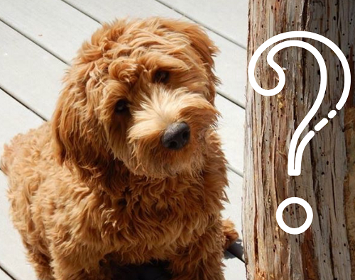 Should We Get A Puppy? 10 questions to help you decide