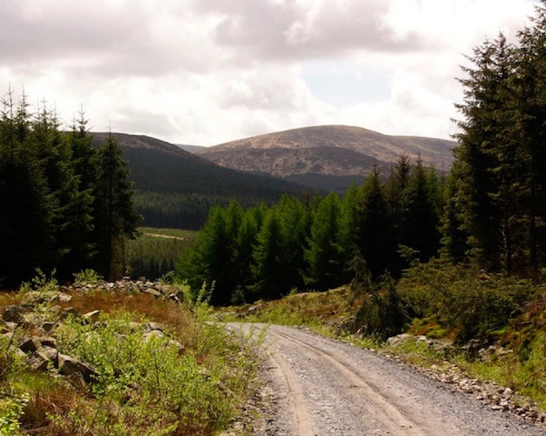 The Galloway Forest
