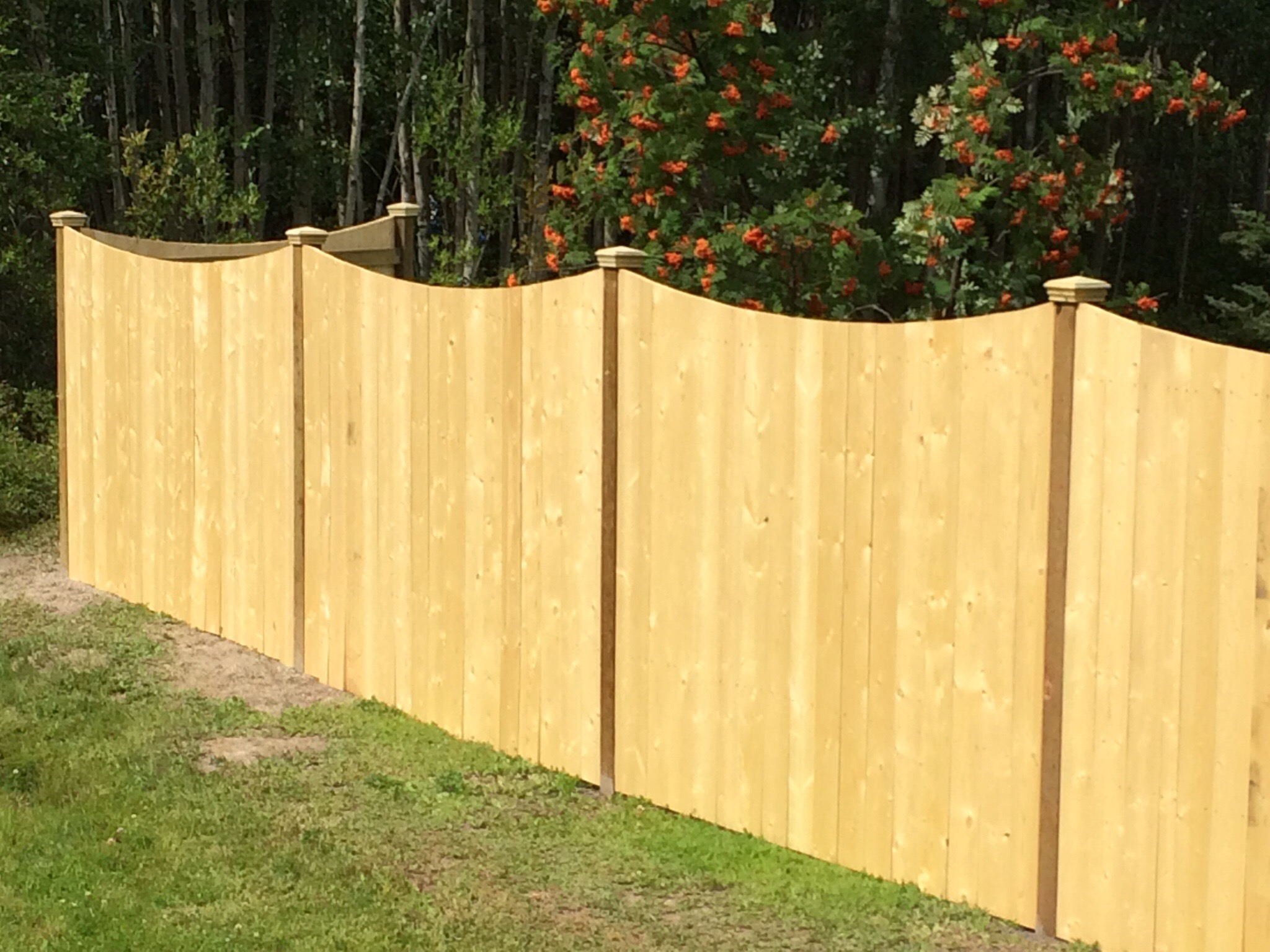 Spruce board privacy fence with pyramid caps