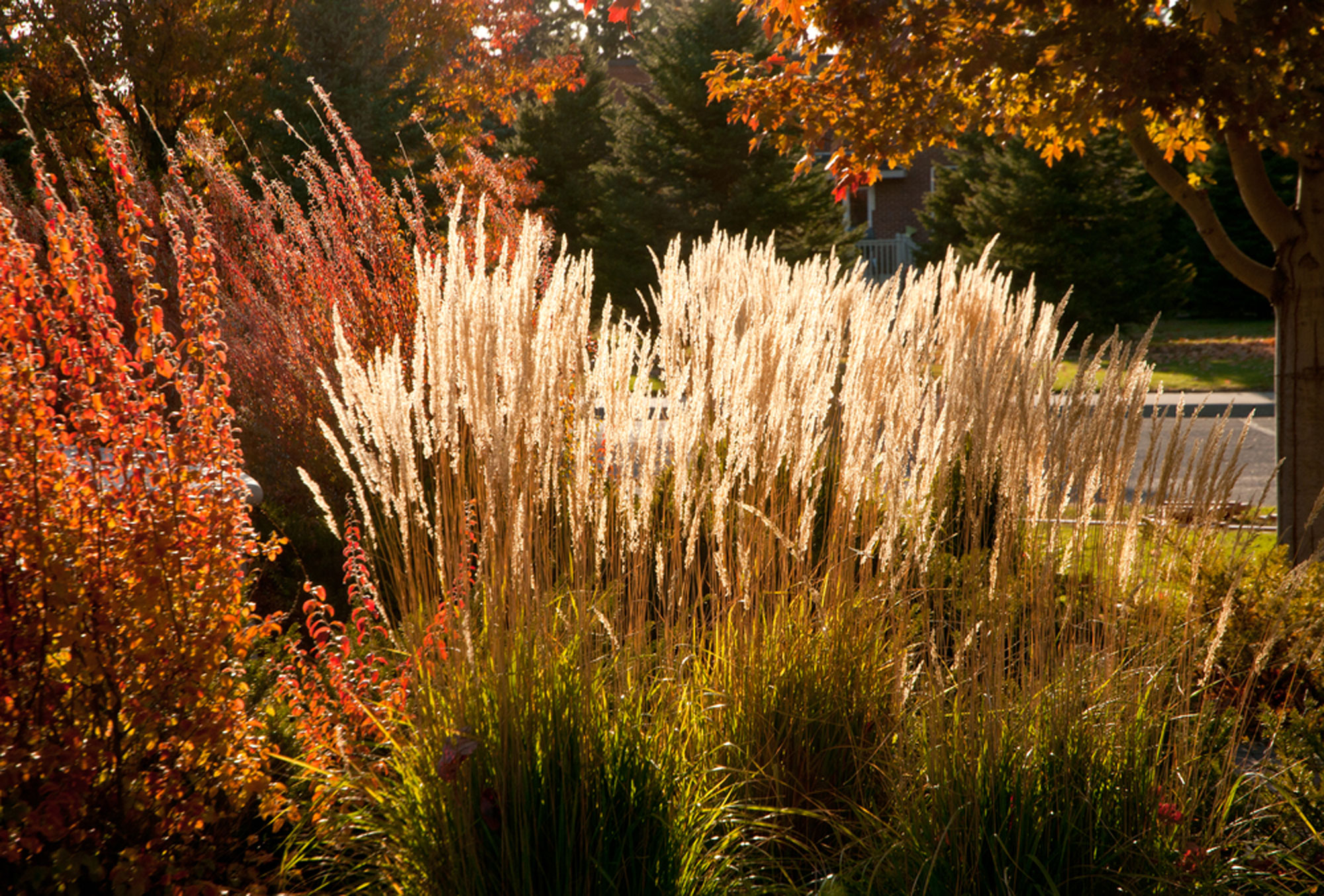 autumnal grass planting for garden bordering and features