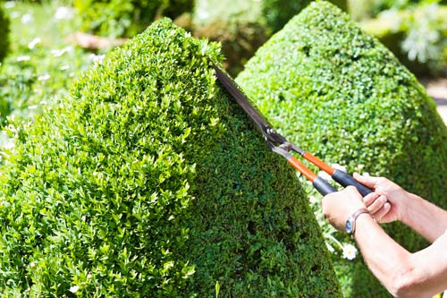 Topiary pruning