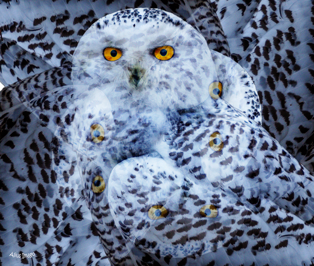Designs Inspired By Nature:  Snowy Owl