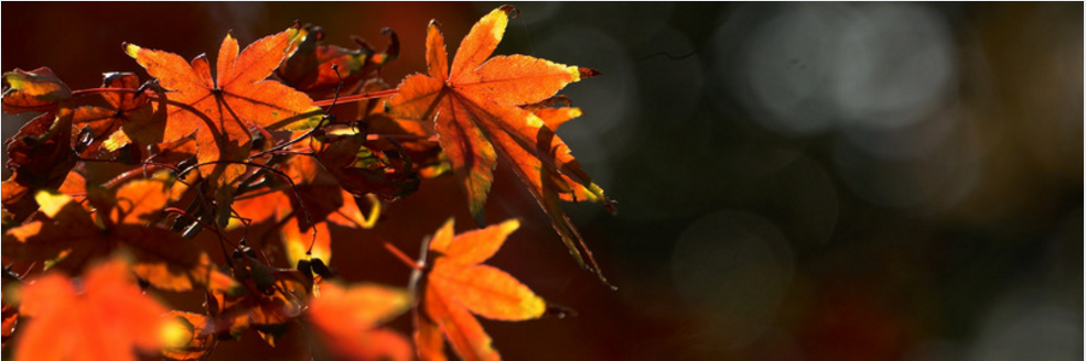 Autumn_Banner_2.PNG