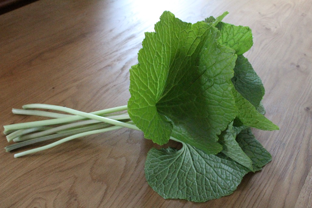 Fresh Wasabi Leave and Stems