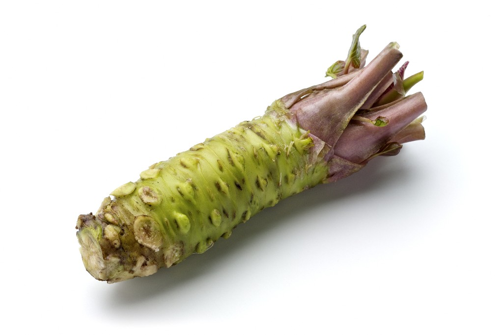 Ordering Fresh Wasabi Rhizomes
