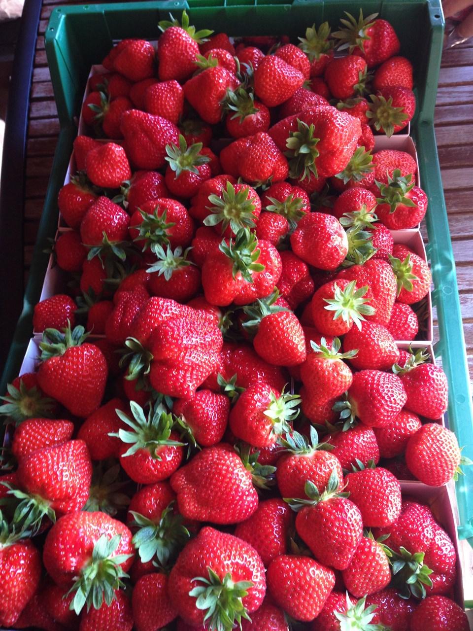 plocka jordgubbar sommarjobb jönköping