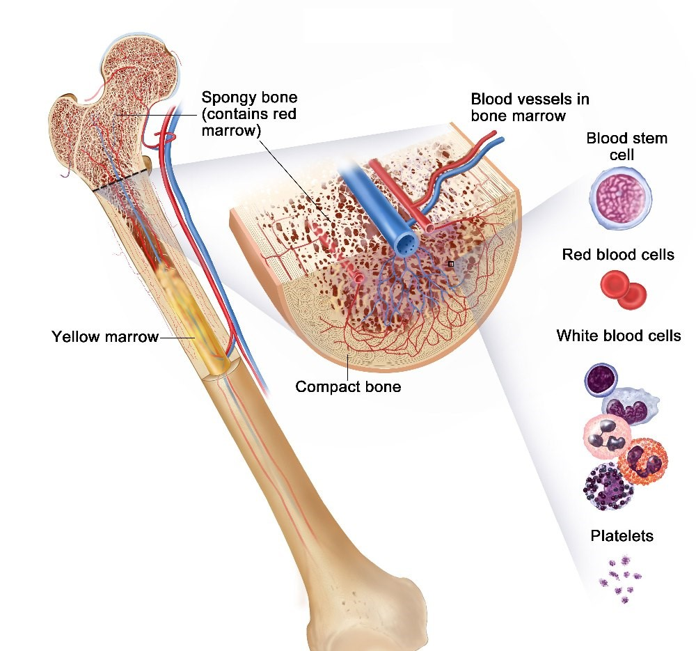 Pathology of Fractures and Fracture Healing
