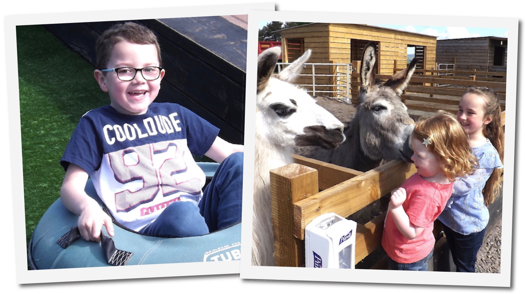 Alpine slide and animals at Dalscone Farm Fun.