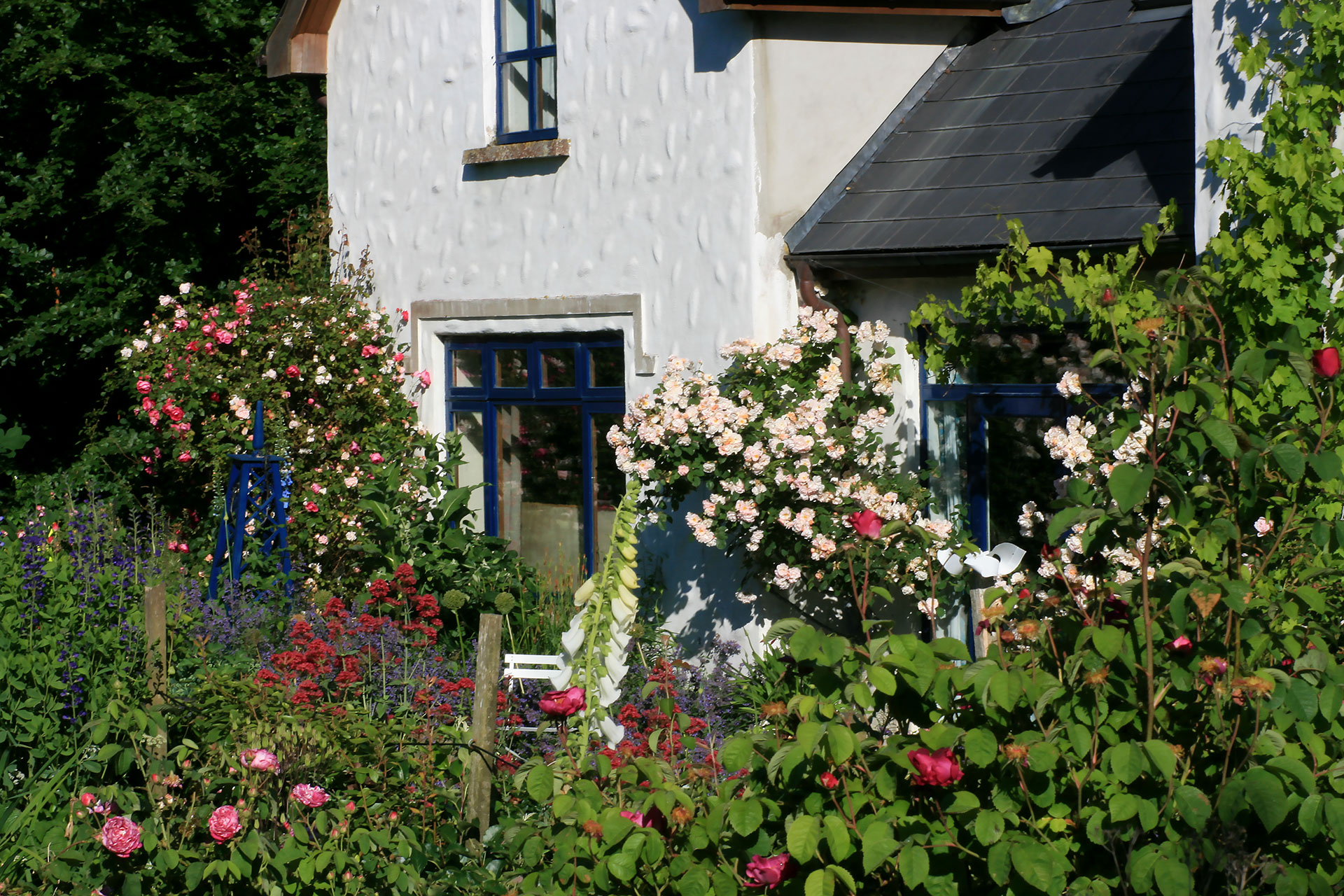 The garden in bloom, at Dunmore Country School