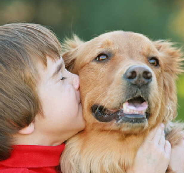 Boy cuddling a golden retriever