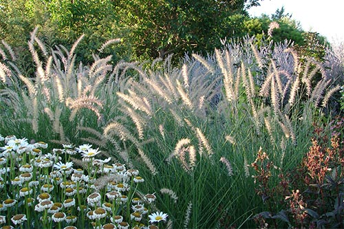 Contemporary planting with grasses & echinacea