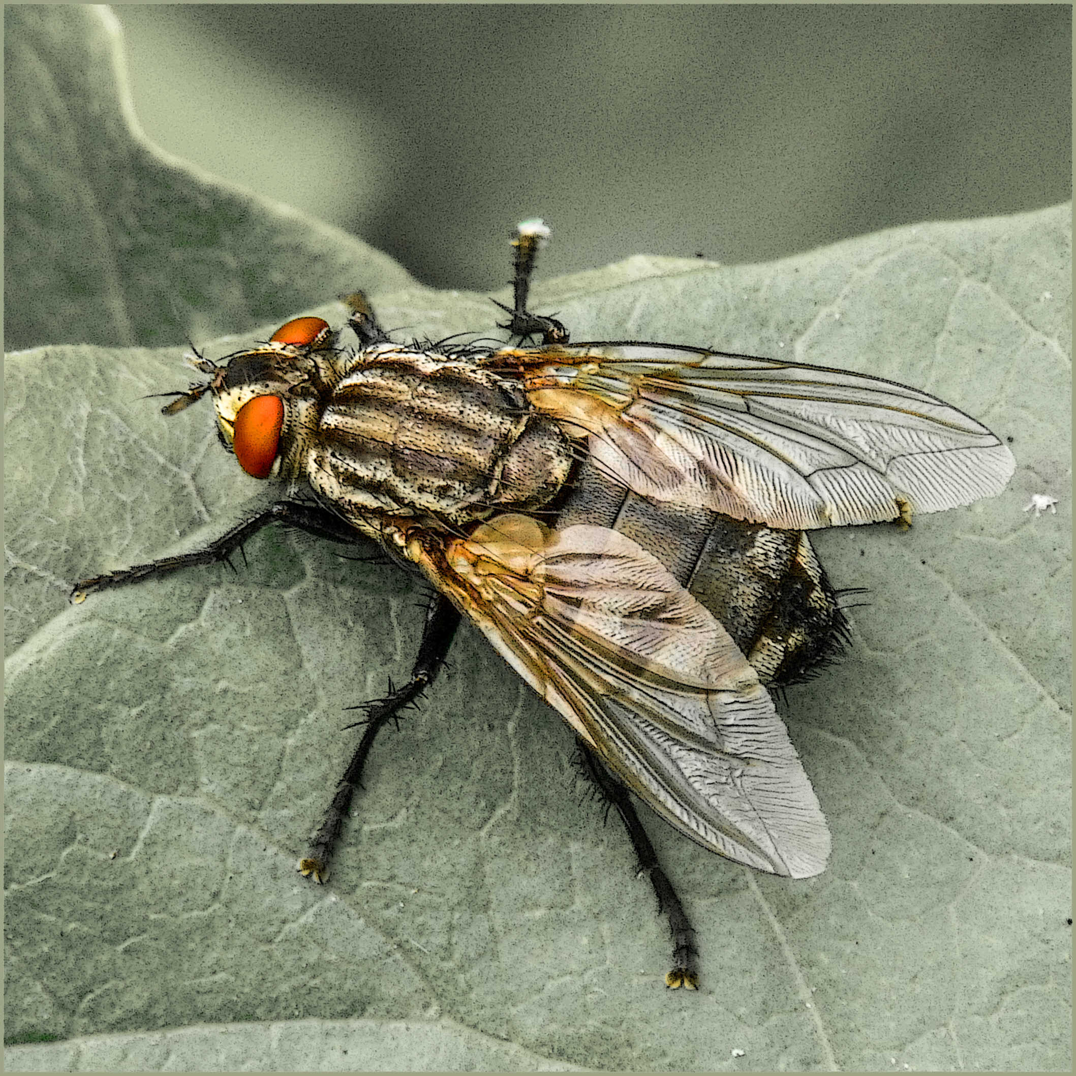 Flies are actually fab critters when you look at the detail.