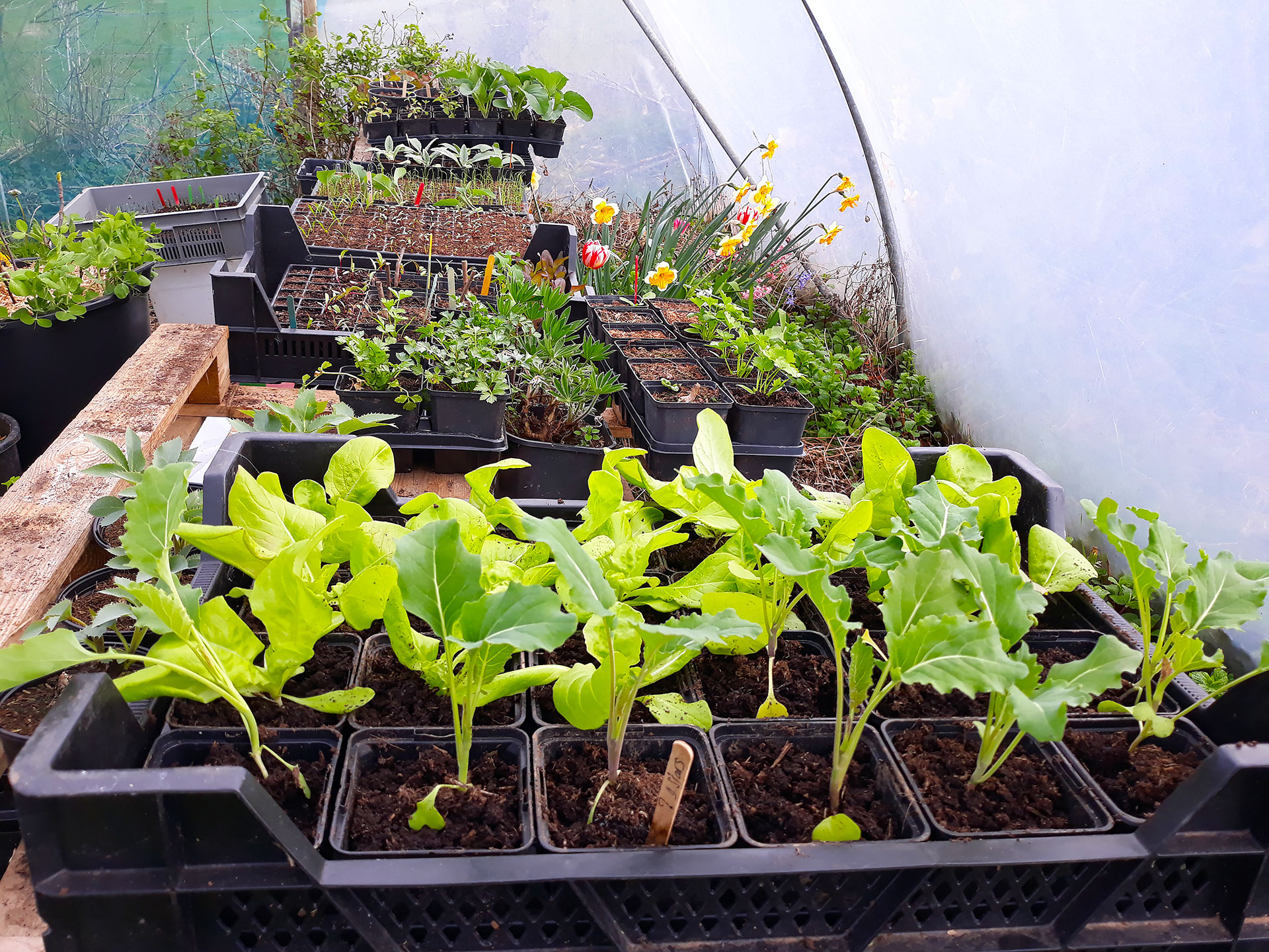 Learn about Polytunnels at Dunmore Country School