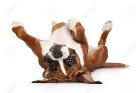 hond op rugjpg
