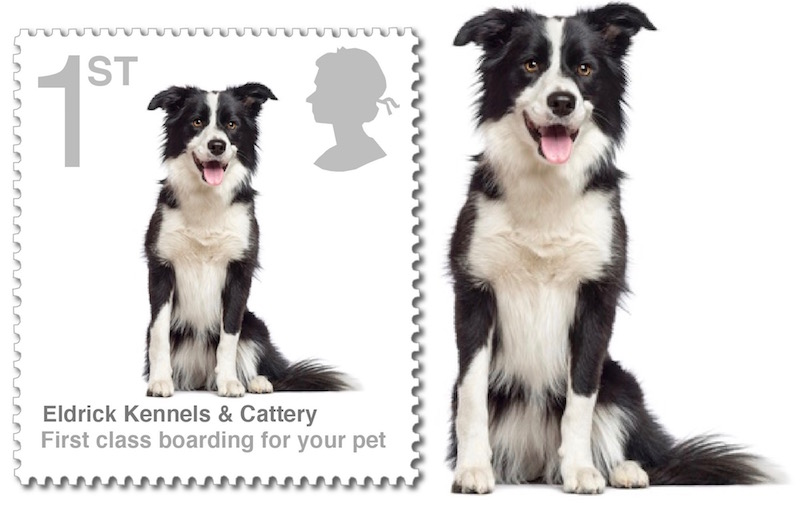 Colmonell kennels and cattery  Eldrick Kennels South Ayrshire