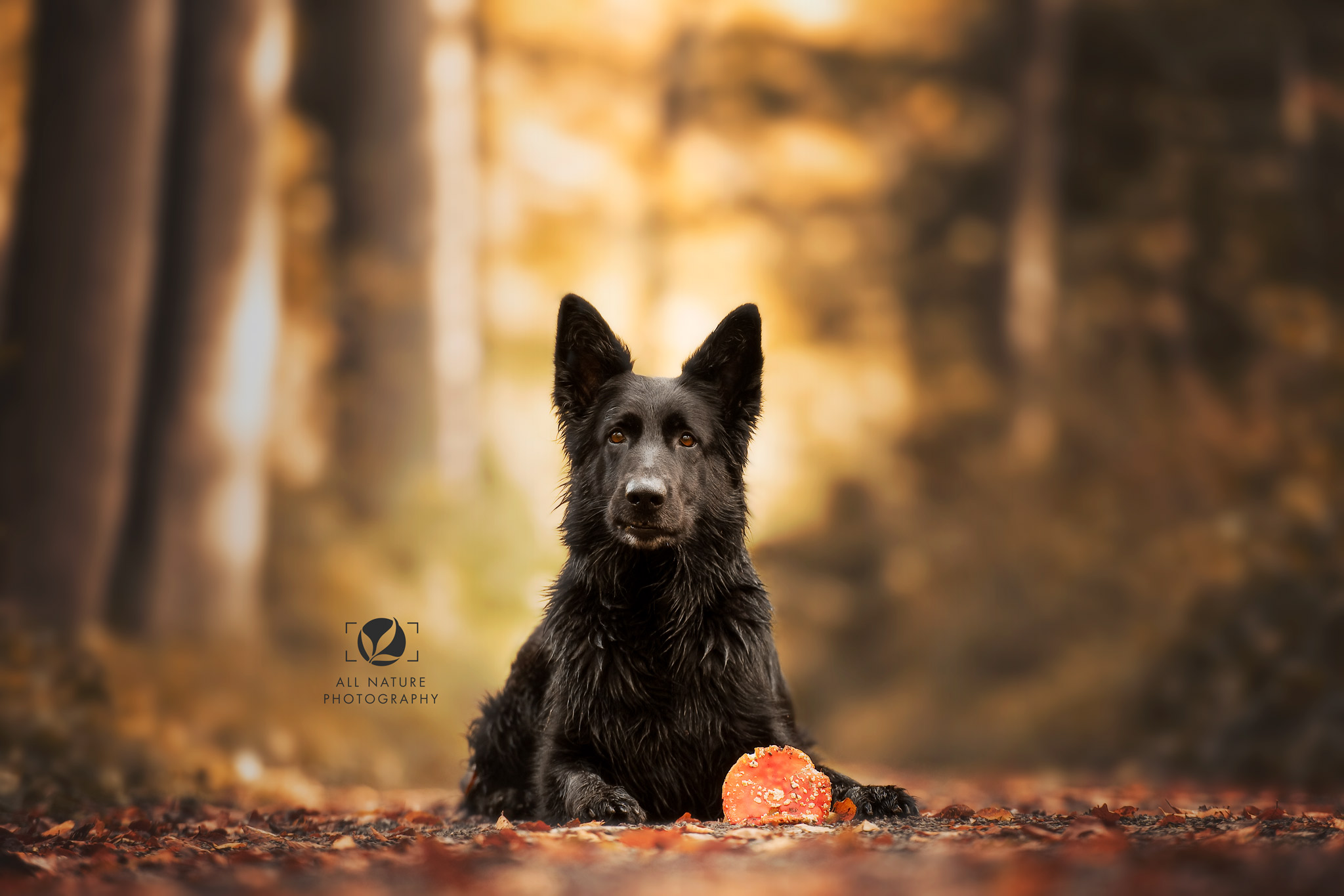 Aruna van Havezathe-Saterslo My Best Friend fokker Oudduitse Herder foto All Nature Photography