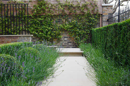 Formal pathway with lavender and buxus