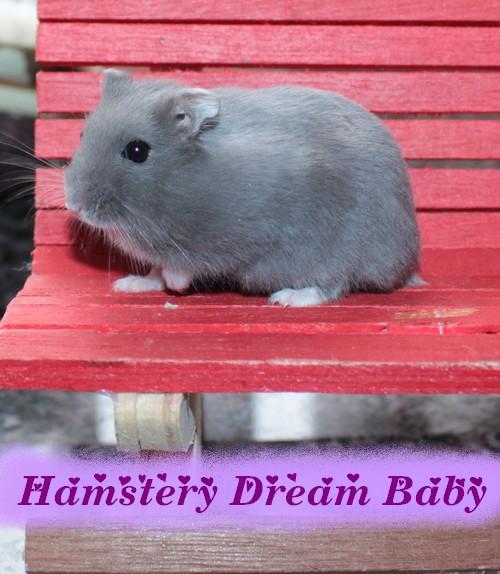 02-12-16 6 Dream Babys Balin voor websitejpg
