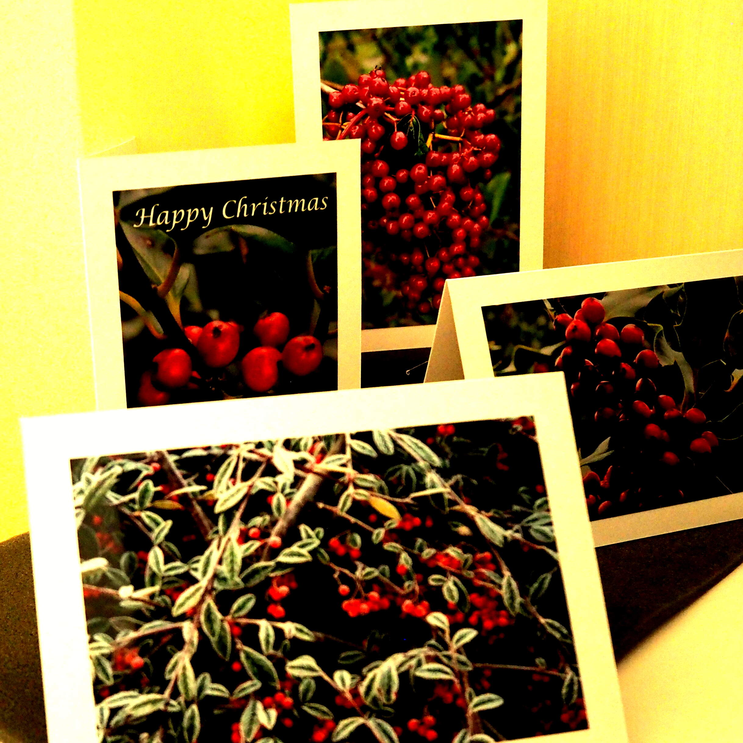 Berried Treasure Card Collection