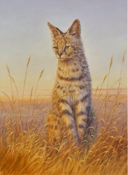 Sunset Serval by Colin Richens