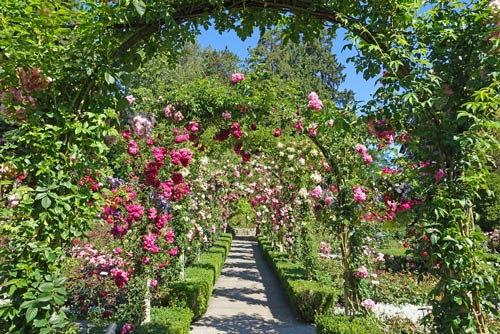 Rose Garden with Arches and Buxus