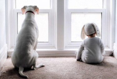 Rear view of a large white dog sitting beside a baby dressed in white. Bother are looking out of a window