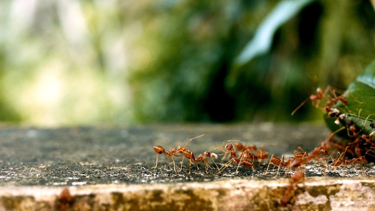 ants-2809019_1280jpg