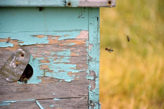 apiario biologicojpg