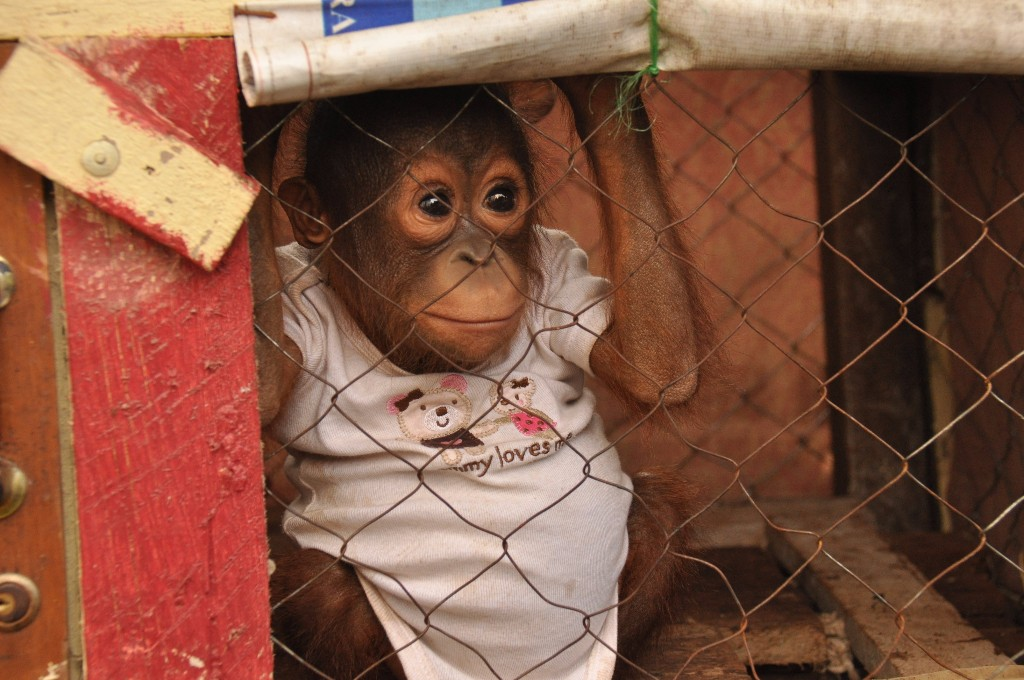 smuggled baby rescued
