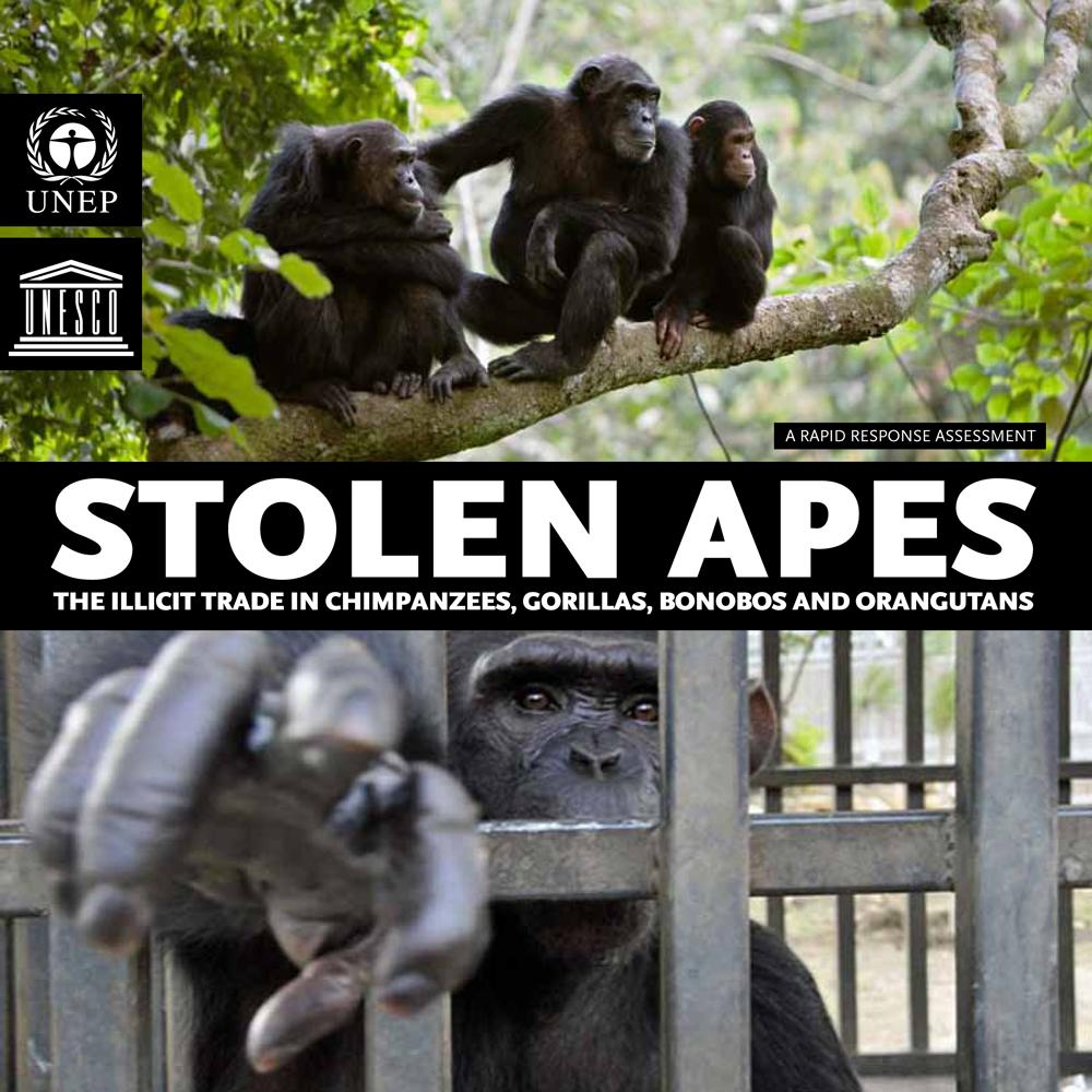 Save the Orangutan: Threats to the orangutan - Pet Trade
